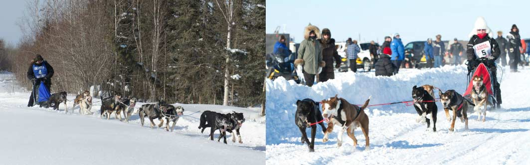 Dog Sled Racing